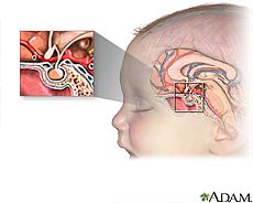 Illustration of the pituitary gland- Pituitary Disorders