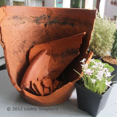 Broken flower pot and plants used to make a scale miniature garden for fairies or dolls.