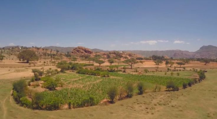 The Ethiopian desert, full of drought and famine just a generation ago, is turning green with crops.
