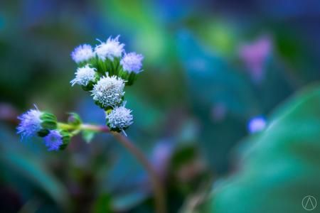 little sweet Photo by alfred chaniago — National Geographic Your Shot