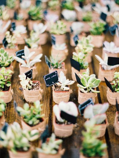 Succulent favors: http://www.stylemepretty.com/2015/01/28/organic-and-elegant-laurel-hall-wedding/ | Photography: Megan W - http://www.megan-w.com/