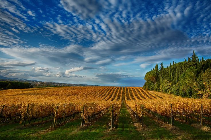 Vineyard Wave by Marco Bicci on 500px