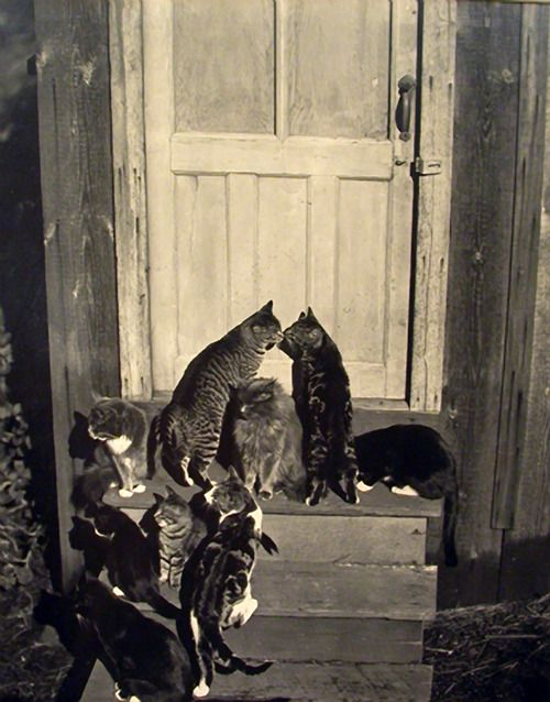 Edward Weston - Cats at Door, 1944. … via Transverse Alchemy, from the delightful gallery and short bio Masters of Monochrome: Part III- Edward Weston.
