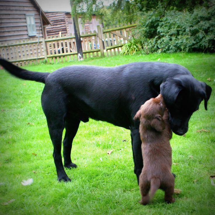 Daddy&puppy in Brick House Farm (Kent)!