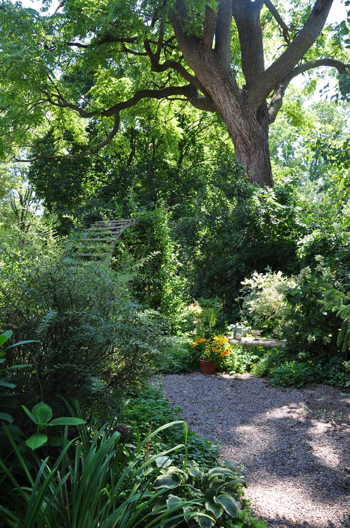 Nice gardening blog with beautiful photos - Three Dogs in a Garden