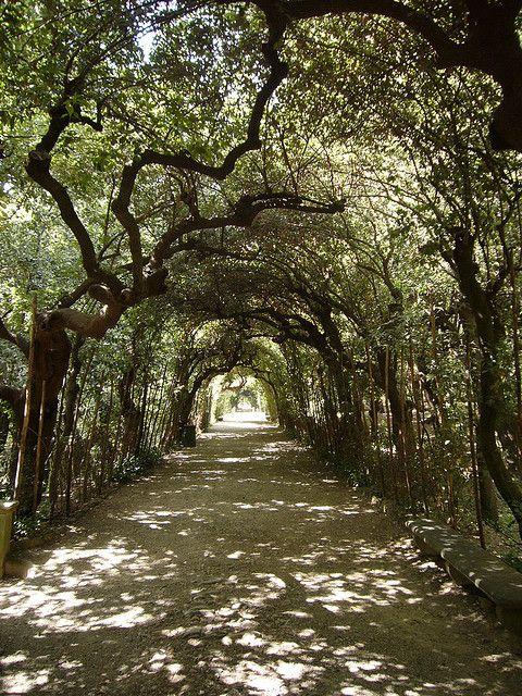 Boboli Gardens - chapter 25