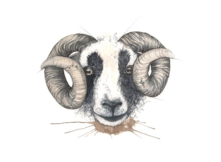 """Villsau"" (WIld sheep)  Copyright: Emmeselle.no  Illustration by Mona Stenseth Larsen"