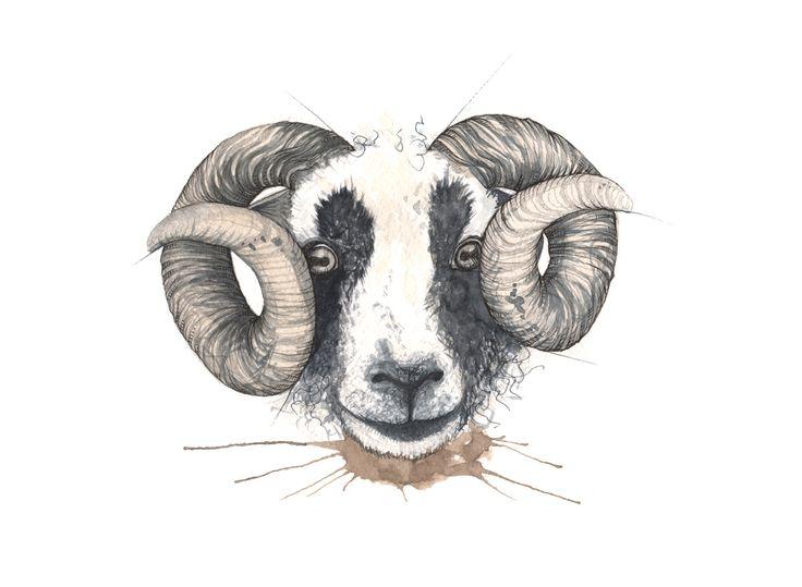 """Villsau"" (WIld sheep)  Copyright: Emmeselle.no  Illustration by Mona Stenseth Larsen"