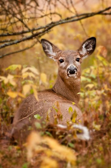 QUIET MOMENT in the trees for this beautiful deer ....<3