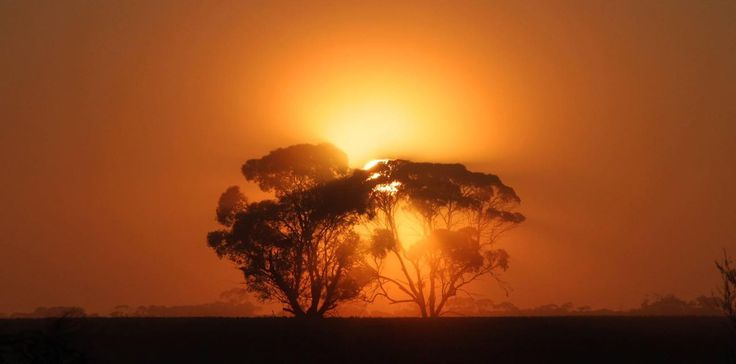 Foggy morning out at Ouyen. Thanks to Glenn Milne for sharing :)