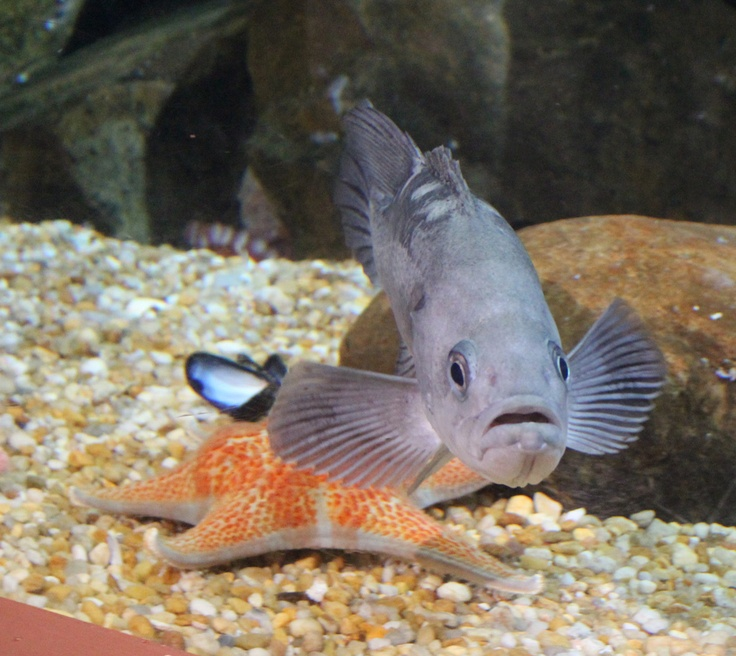 17 best images about frogs fish turtles more on for Georgia freshwater fish