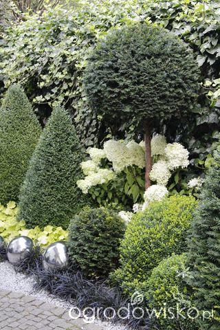 Garten grün-weiß. Buchsbaum und Hortensien / Boxwood and Hydrangea