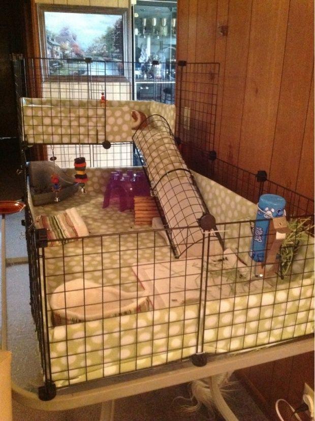 104 best images about hedgehog cage on Pinterest ...