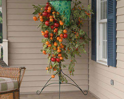 Ανάποδη καλλιέργεια ντομάτας (οδηγίες-βίντεο)
