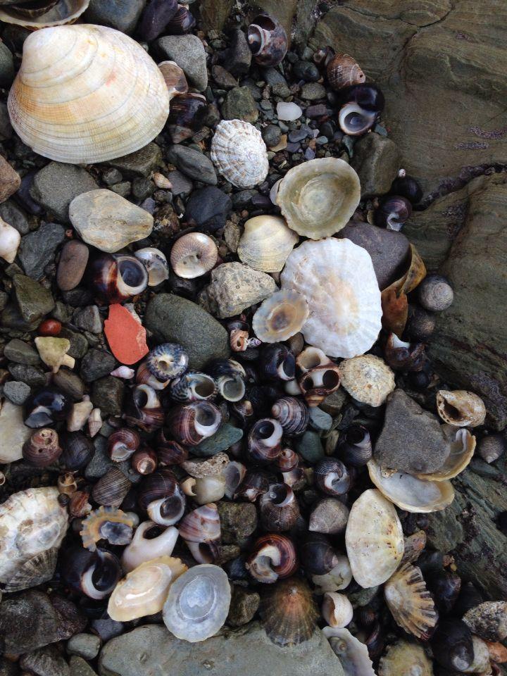 Cape clear shells xx