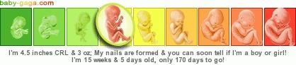 fetal development pregnancy ticker