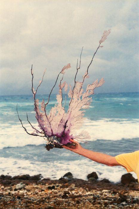 beautiful: Sea Waves, Beaches Beautiful, Coral Pink, Sea Creatures, Sea Art, The Ocean, Treasure Hunt'S, Young Girls, Coral Reefs