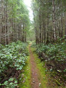 Hiking in Boyle Point Provincial Park, Denman Island, Canada