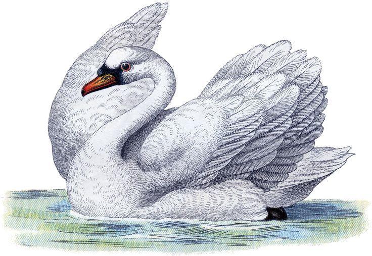 Ангелы демоны, картинки для детей рисованные лебедь