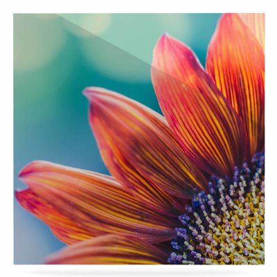"""East Urban Home Flower Bokeh 'Fire & Ice' Photographic Print on Metal Size: 10"""" H x 10"""" W x 1"""" D"""