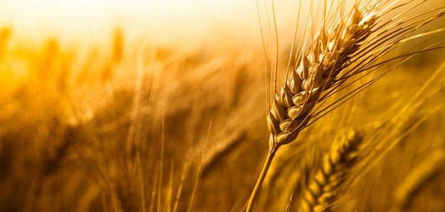 Alimentaire : un enfant de 11 ans détruit Monsanto