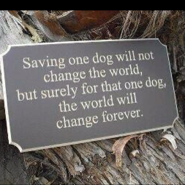 rescue dogs :): Dogs Quotes, Puppies, Adoption A Dogs, Memories Tablet, Pet, So True, Shelters Dogs,  Plaques, Animal