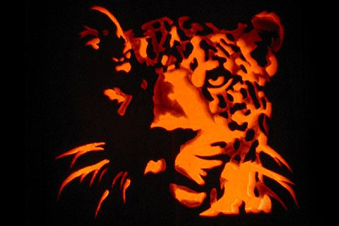 315 best images about fall on pinterest halloween for Cat carved into pumpkin