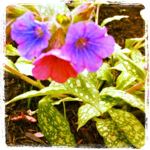 May Garden -- Day 7