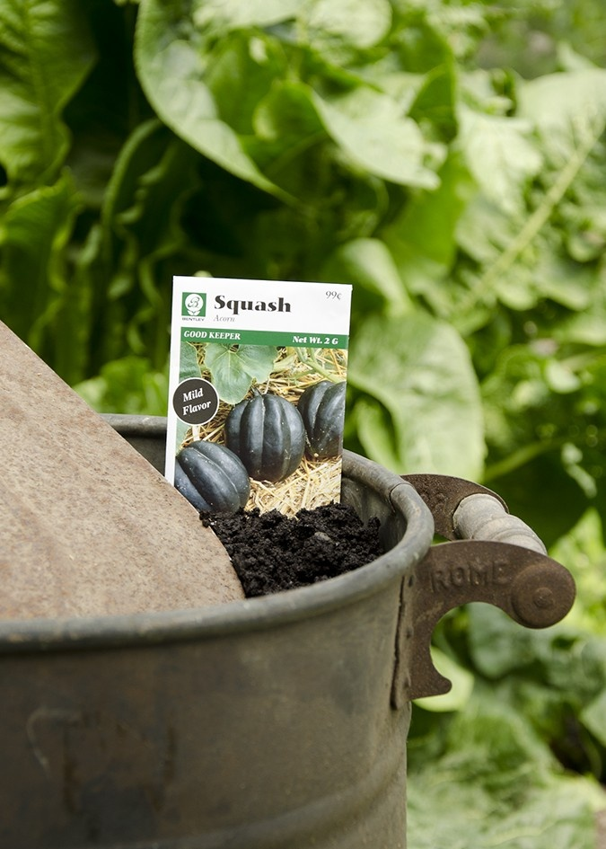 how to grow acorn seeds