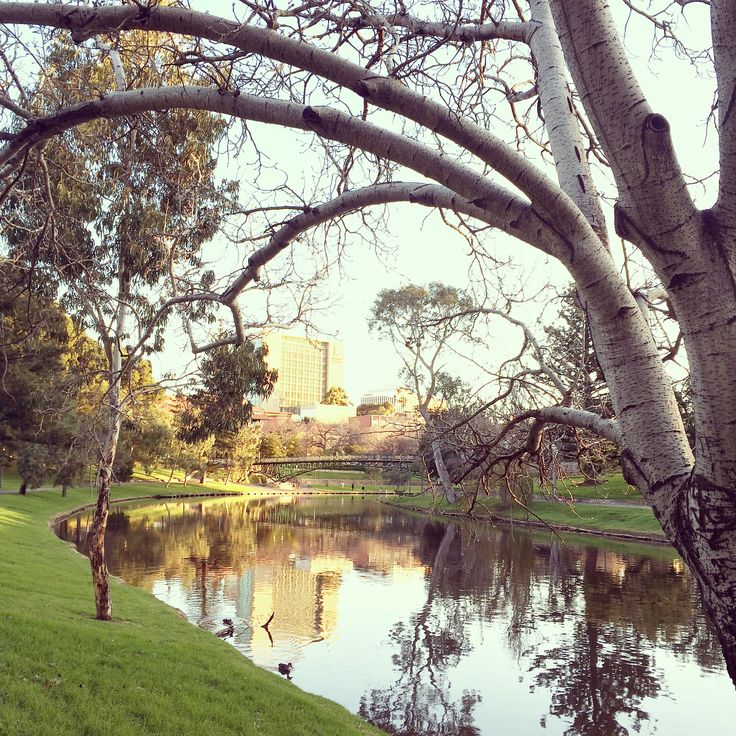 Afternoon stroll (Riverbank - Adelaide, South Australia)