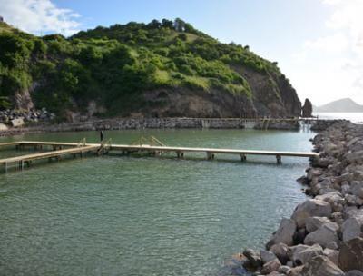 Dolphin Discovery Saint Kitts.  Bird Rock Beach Hotel, Basseterre, Saint-Christophe-et-Niévès