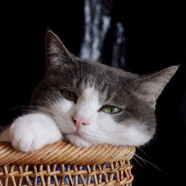 台風が近づいてます。皆さま気を付けてお過ごし下さいね。 #土アップ祭 #美にゃん祭  #国境なき猫の輪団 #全ての猫が幸せに暮らせる世のニャかを #小さな猫が大きな癒しにニャる #PMENS #あざらし教 #猫変態族 #愛猫 #保護猫 #ねこ #はちわれ #ふわもこ部 #nekoclub #pecon #best_moment_alive #ペコねこ部 #peco #東京ガスの新電力販売量ナンバーワン #ピクネコ #みんねこ #にゃんすたぐらむ #cat #cats #catlover #catsofinstagram