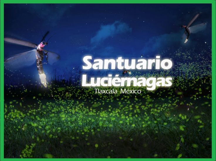 Santuario de Luciernagas, Tlaxcala  Bosque Encantado -Julio