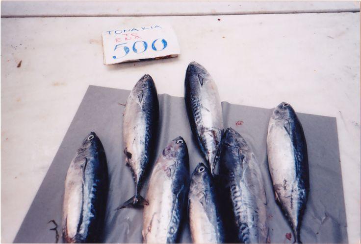Tuna fish, photo, Athens 2000