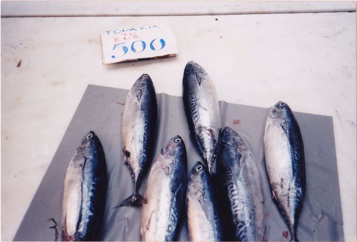 Tuna fish, photo, Athens 2000