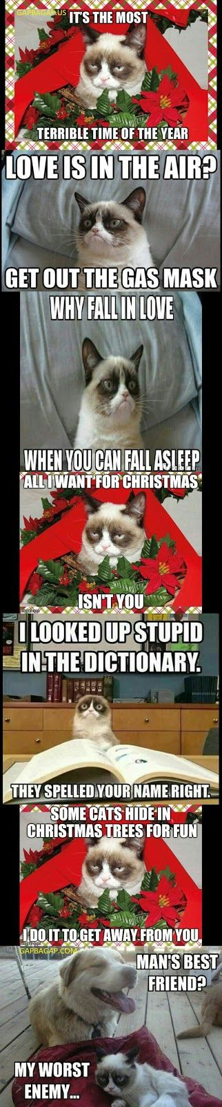 7 Funny Grumpy Cat Memes Collection From Around The World