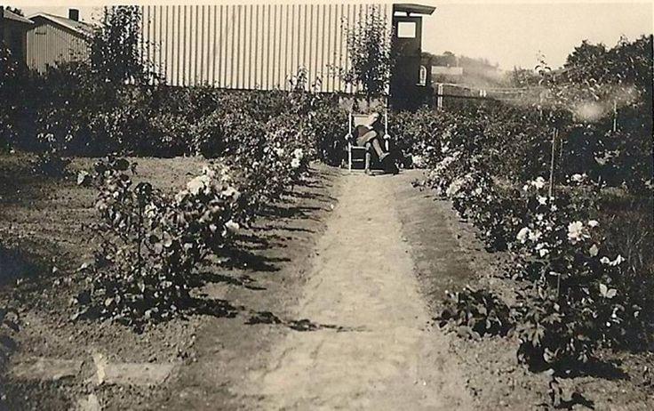 Exempel på växtval från 40- och 50-talet
