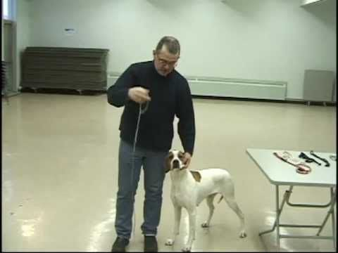 Dog Show Tips - Episode 3   The Lead