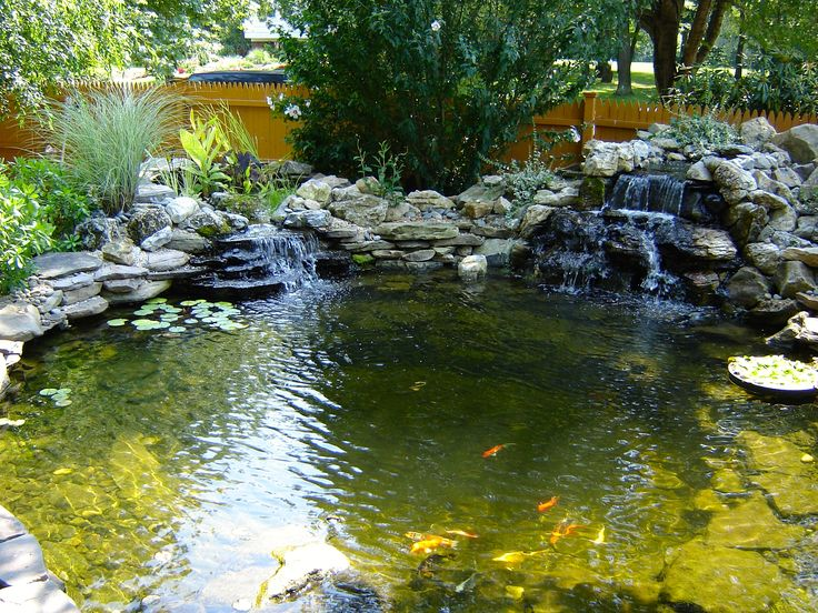 Backyard ecosystem 28 images backyard ponds are truly for Fish ponds melbourne