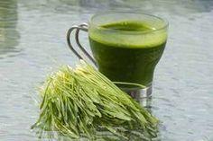 Kanser diye bir şey yok sadece B17 vitamini eksikliği var. Buğday çimi faydaları nelerdir