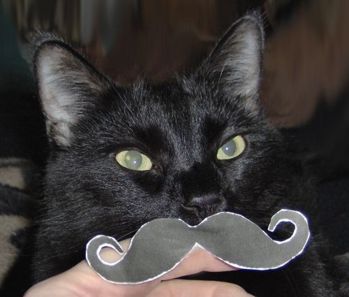 Moustache Cat is very Mustache !