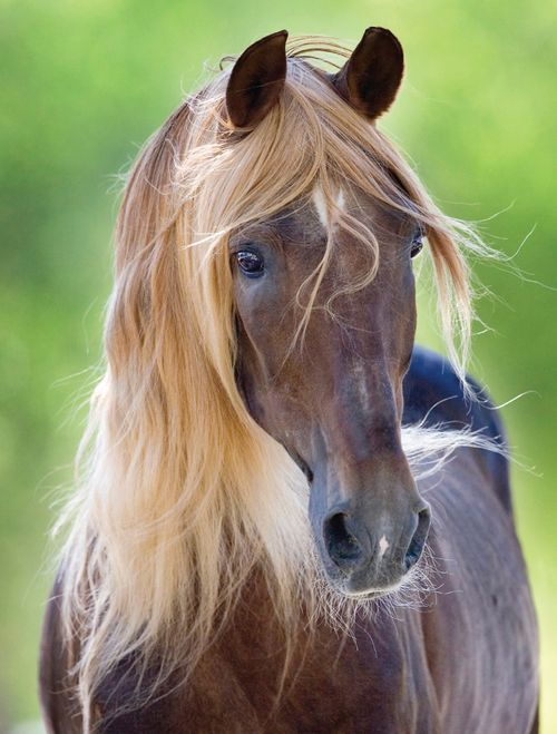 This horse has better hair than I do.