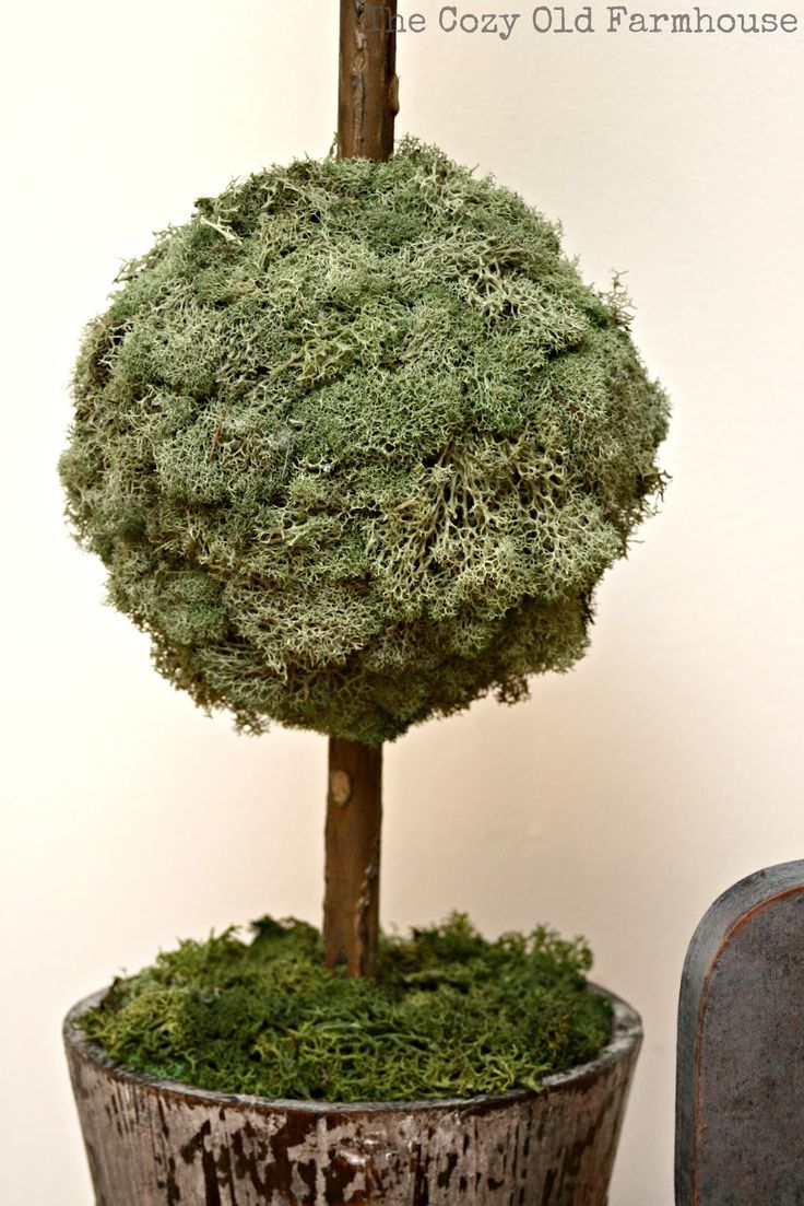 49 best Topiary images on Pinterest | Topiaries, Creepers and ...