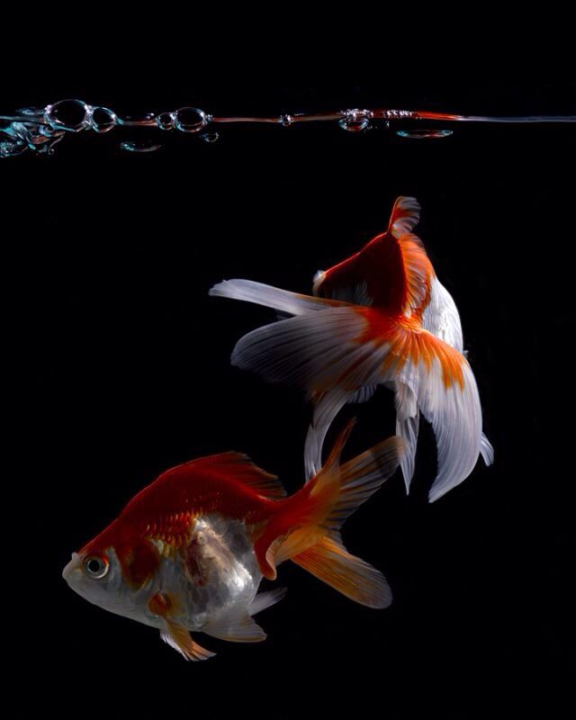 195 Best Images About Good Looking Fish Pics On Pinterest