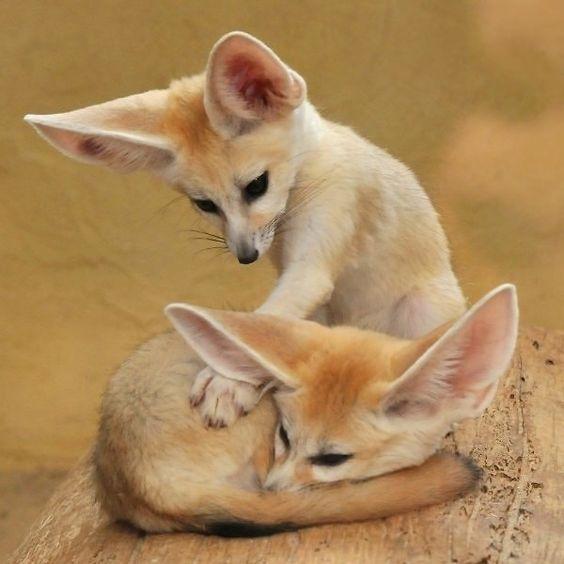 #Fuchs #Wildlife #Fotografie #Tiere,  #Fotografie #Fuchs #Tiere #Wildlife