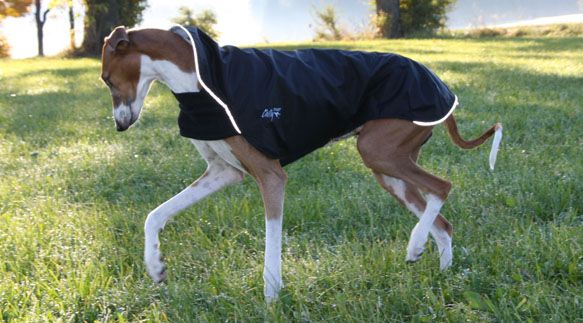 Chilly Dogs - Outdoor gear for Active Dogs - Dog Coats