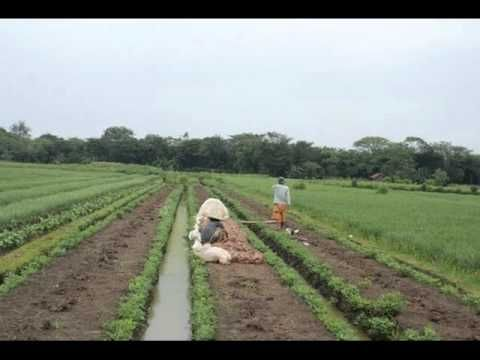 nasidah ria-lingkungan hidup.wmv
