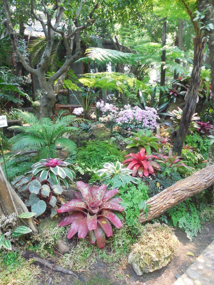 1294 best Gardens Tropical images on Pinterest Tropical garden
