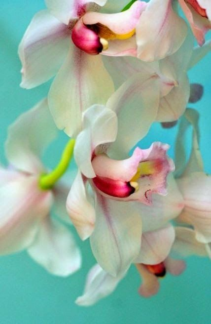 Choose-Diy: Orchid Love the turquoise background!