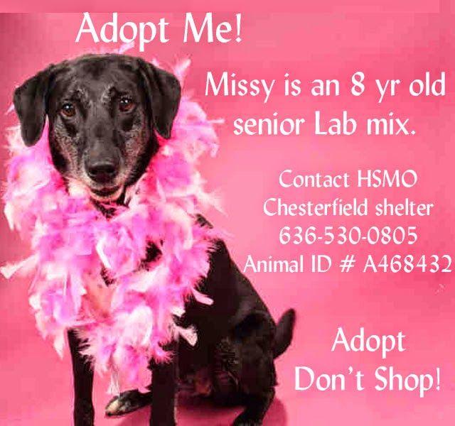 Humane Society Missouri Adoptable Dogs